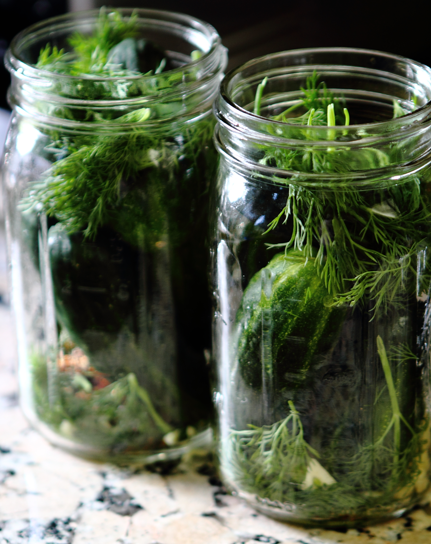 Making Dill Pickles