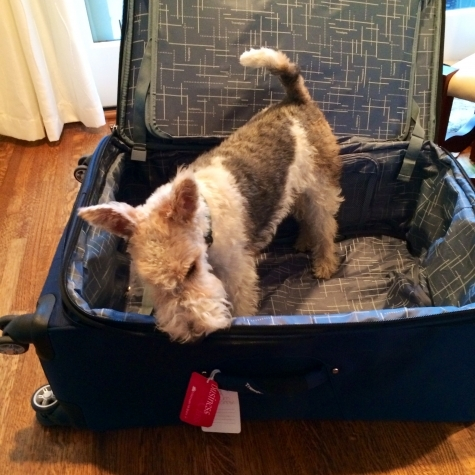 wire hair terrier suitcase